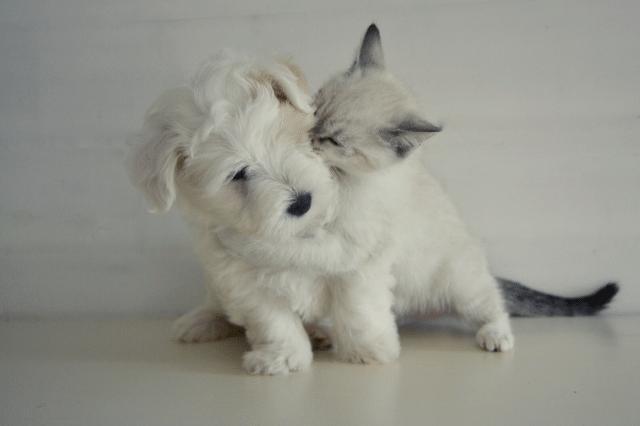 ペット 犬 猫